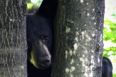 Black bear photo by Michelle Buntin.
