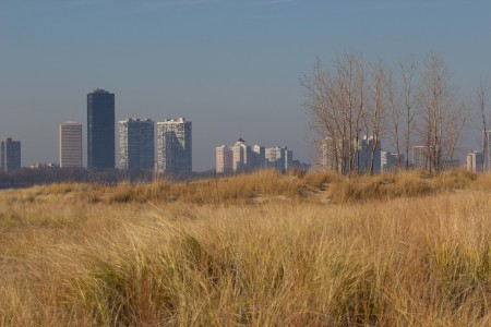 The view north from Montrose Point, looking over the dunes to high rise apartments on the north side of Chicago.