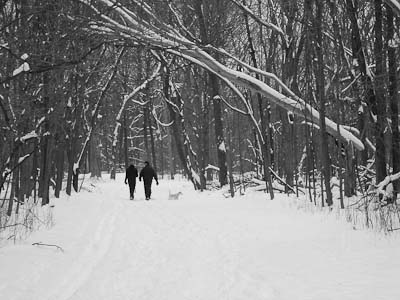 Walking trails snow upland forest Cook County Forest Preserve Dam No. 4 Woods animalia project photo by susan ask