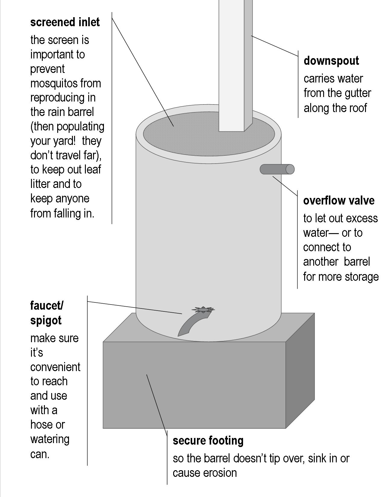 rain barrel anatomy animalia project