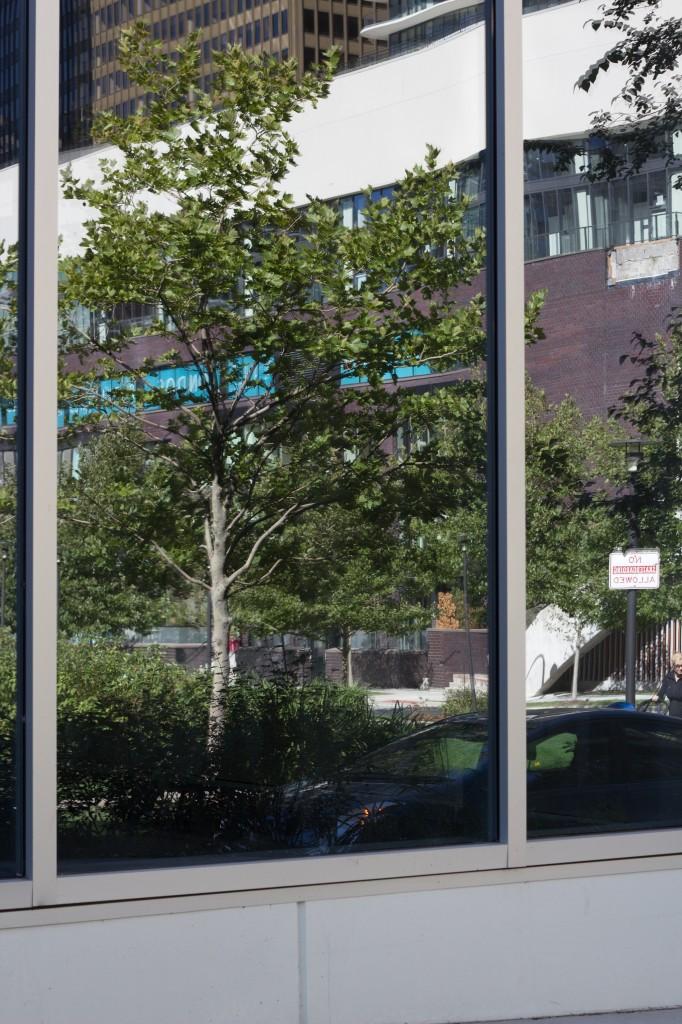 bird collision reflection hazard tree animalia project