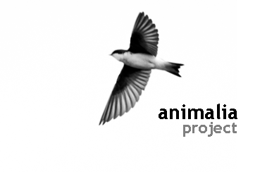 animalia project logo