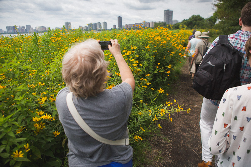 The Chicago skyline peeks over the native prairie plantings at Montrose Harbor-- a treat on the transit to trail tour.  photo:  joe mazza / brave lux